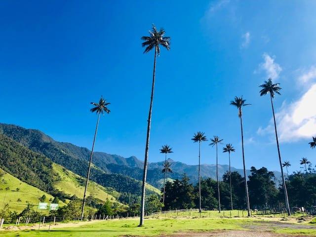 Eje Cafetero, Valle del Cocora