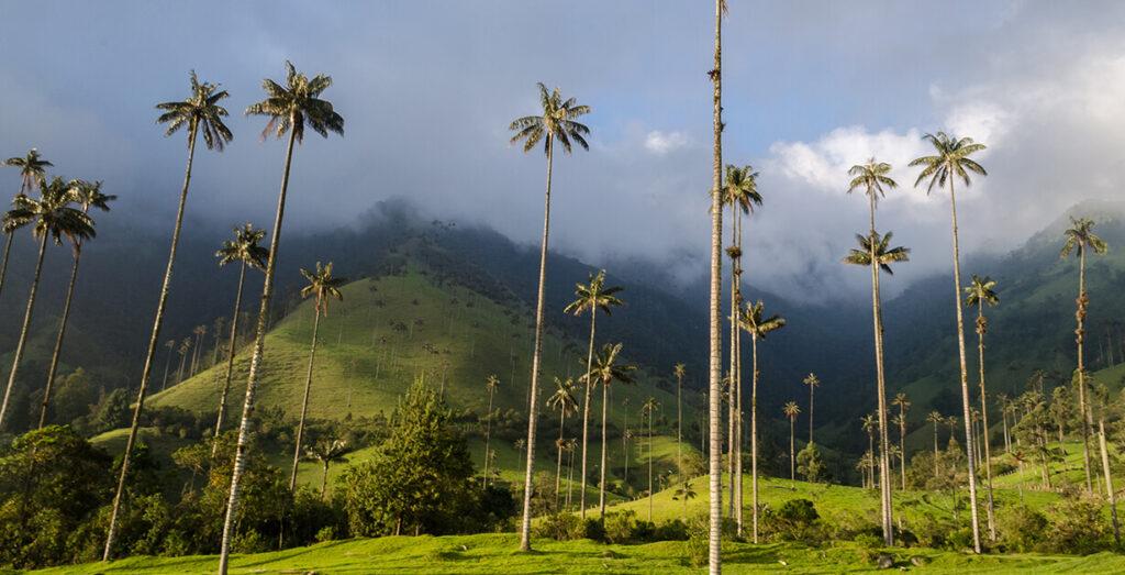 Valle del Cocora en el Eje cafetero