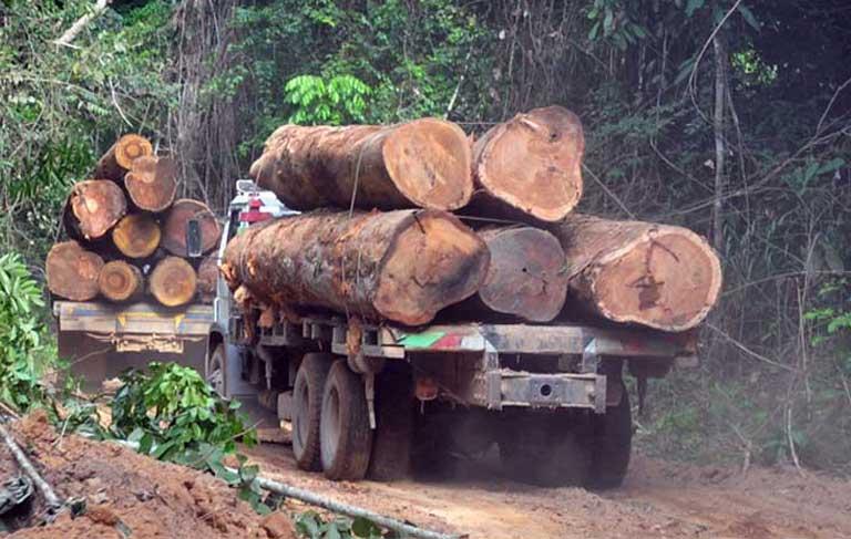 Deforestación ilegal en Brasil