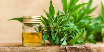Aceite CBD del Cannabis